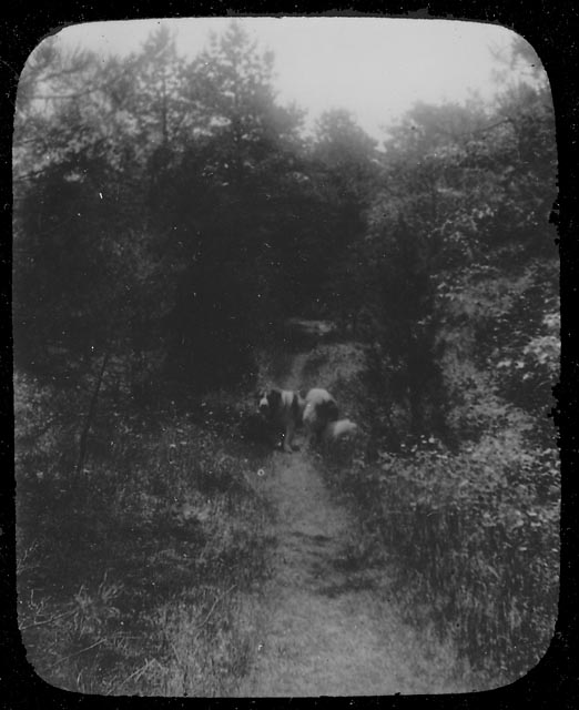Old Shiloh on the Old Bay Path, ca. 1900