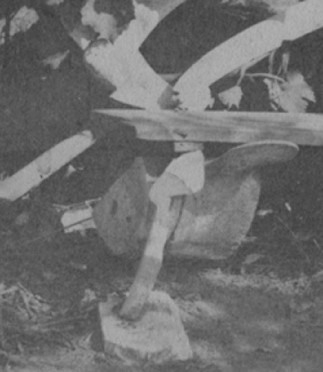 Detail of whalebone chair